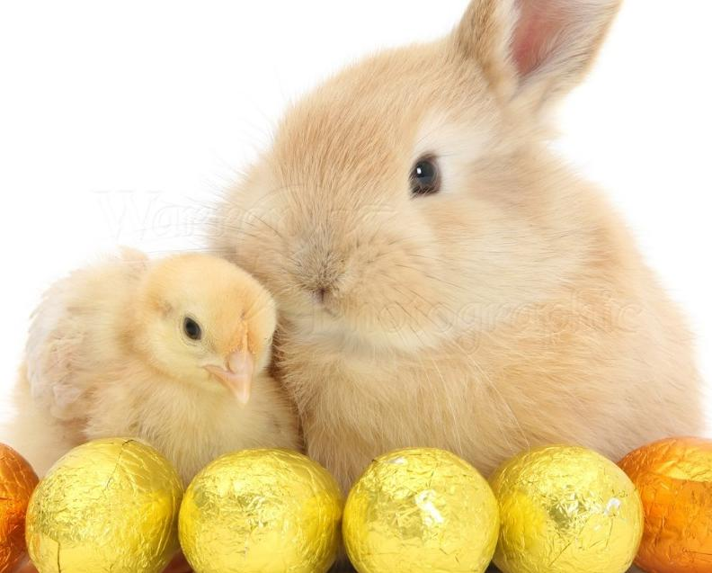 Sandy Easter Bunnies Adultism 1